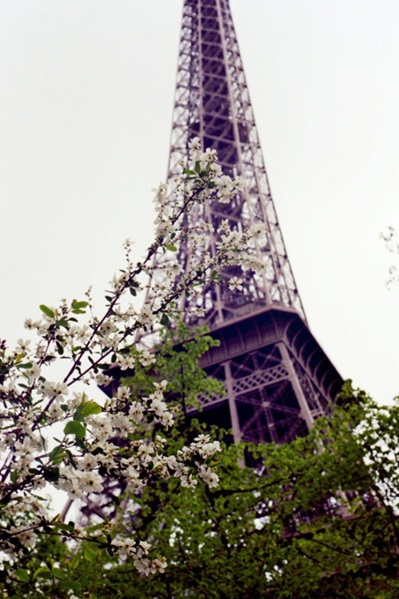 Flowers and a Purple Tower